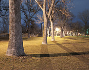 Lighted Park Prints - Row of Trees in a Park at Night Print by Thom Gourley/Flatbread Images, LLC