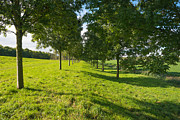 Flevoland Art - Row of trees in sunlight by Jan Marijs