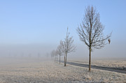 Bare Trees Art - Row of trees in the morning by Matthias Hauser