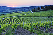 Chianti Hills Prints - Rows of Grapevines at Sunset Print by Jeremy Woodhouse