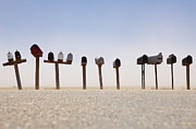 Mail Box Framed Prints - Rows of Mailboxes and Desert Dust Framed Print by Paul Edmondson