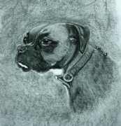 Boxer Drawings - Roxy by Terri Mills