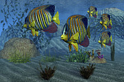 Fish Fins Framed Prints - Royal Angelfish Shimmer Framed Print by Corey Ford