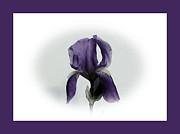 Purple Digital Art - Royal Iris by Marsha Heiken