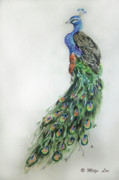 Mitzi Framed Prints - Royal Peacock Framed Print by Mitzi Lai