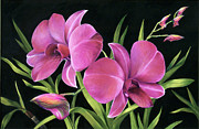 Black Background Paintings - Royal Pink Orchids by Nancy Tilles