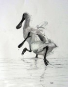 Spoonbill Drawings Metal Prints - Royal Spoonbills Wind-ruffled Metal Print by Colin L Williams