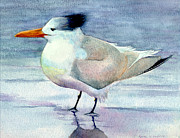 Sarah Buell Dowling - Royal Tern