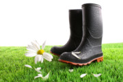 Beginnings Prints - Rubber boots with daisy in grass Print by Sandra Cunningham