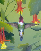 Hummingbird Prints Prints - Ruby and Columbine Print by Michael Allen