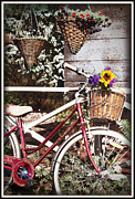 Vintage Bicycle Originals - Ruby Belle by Carmen Ann Photography