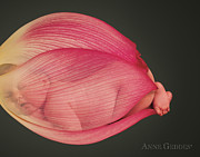 Anne Geddes Prints - Ruby in Lotus Print by Anne Geddes