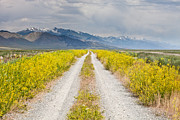 Ruby Mountains Wildflower Road Print by Sheri Van Wert