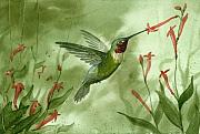 Hummingbird Paintings - Ruby Throated Hummingbird by Sean Seal