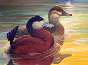 Ducks Paintings - Ruddy Duck Pair by Laurie Cook