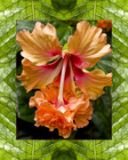Macro Photos Prints - Ruffled Beauty Print by Bell And Todd