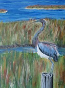 Carolyn Speer - Ruffled Blue Heron