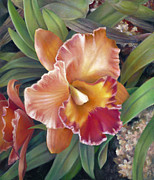 Collector Paintings - Ruffled Peach Cattleya Orchid by Nancy Tilles