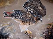 Red Tail Hawk Paintings - Ruffled Redtail by Dustin Curtis