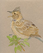 Singing Pastels Originals - Rufous-napped Lark by Flo Hayes