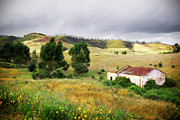 Grassland Photo Posters - Ruin in Countryside Poster by Carlos Caetano