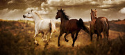 Horse Art Photographs Posters - Run for the Hills Poster by Patty Hallman