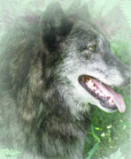 Large Male Wolf Prints - Run In The Fern Print by Debra     Vatalaro