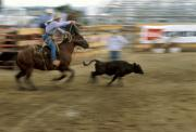 Roping Horse Prints - Run Little Doggie Print by Jerry McElroy