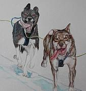 Husky Drawings Metal Prints - Run Metal Print by Tracey Hunnewell