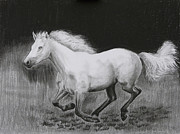Horse Drawings - Runaway Mollie by Tomas OMaoldomhnaigh