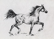 Horse Drawing Posters - Running Arabian Horse Drawing 1 Poster by Angel  Tarantella