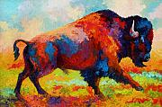Bulls Painting Framed Prints - Running Free - Bison Framed Print by Marion Rose