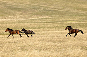Equine Photo Posters - Running Free Poster by Mike  Dawson