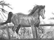 Field Drawings - Running Horse by Bobby Shaw