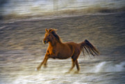 Dog Greeting Cards Prints - Running Horse Print by James Steele