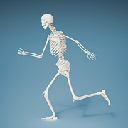 Biomedical Illustration Art - Running Skeleton, Artwork by Andrzej Wojcicki