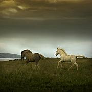 Foals Metal Prints - Running Towards The Cliff Metal Print by Angel  Tarantella