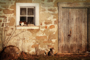 Fall Grass Posters - Rural barn with cats laying in the sun  Poster by Sandra Cunningham