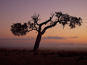Australia Digital Art - Rural Mist At Sunrise by Heather Thorning