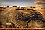 Yellow Ochre Prints - Rural Spain View Print by Mal Bray