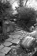 Tree Roots Digital Art Prints - RURAL STEPS in BLACK AND WHITE Print by Rob Hans