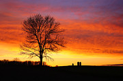 Tree Line Prints - Rural Sunset Print by Bill Pevlor