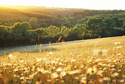 British Nature Prints - Rural Wildflower Meadow In Summer Evening Sunlight, East Sussex, Uk Print by Richard Bloom