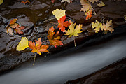 Autumn Water Prints - Rushing Autumn Print by Jim Speth