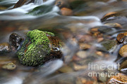 Forest Floor Framed Prints - Rushing Water Framed Print by Ted Kinsman