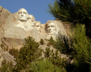 South Dakota Tourism Photos - Rushmore Pine Needles by Mike Oistad
