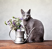 Cute Cat Posters - Russian Blue 02 Poster by Nailia Schwarz
