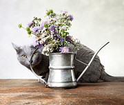 Russian Blue 03 Print by Nailia Schwarz
