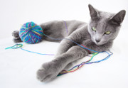 Charming Art - Russian Blue by Nailia Schwarz