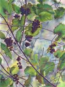 Vine Grapes Painting Posters - Russian Grapes Poster by Marsha Elliott